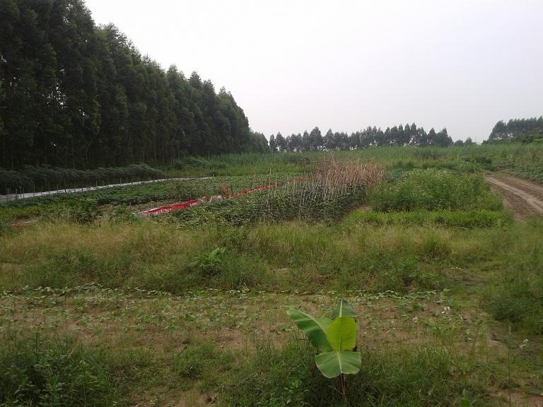 惠州地皮ope手机客户端@东坑50亩工业土地ope手机客户端