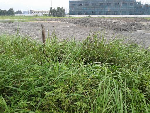 东莞地皮出租沙头20亩土地出租订做ope体育滚球