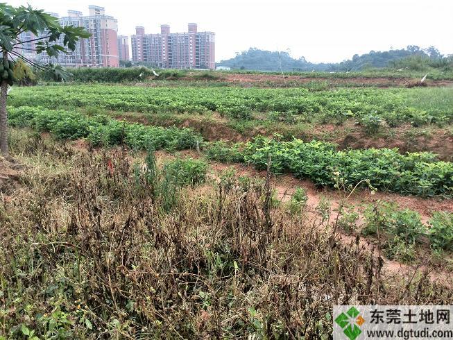 土地流转竞博网站16亩工业土地竞博jbo下载安卓