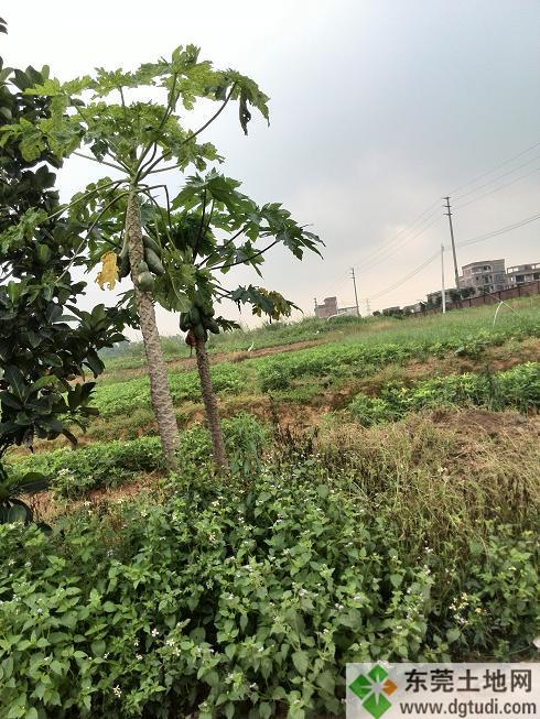 黄江商住用地转让12亩